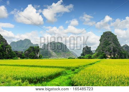 Scenic View Of Bright Green Rice Fields Among Karst Mountains