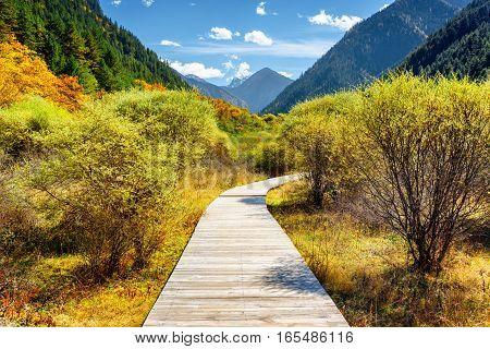 Wooden Boardwalk Across Autumn Forest Among Mountains