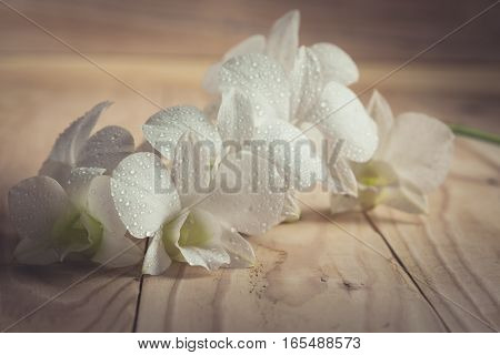 White Orchid(phalaenopsis ) On A Wooden Background Close-up , Vintage
