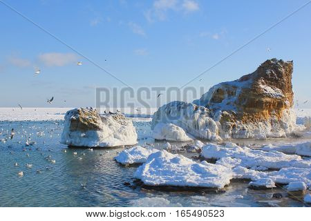 The picture was taken on the Black Sea near the city of Odessa. The picture shows a winter seascape with sea birds - gulls.