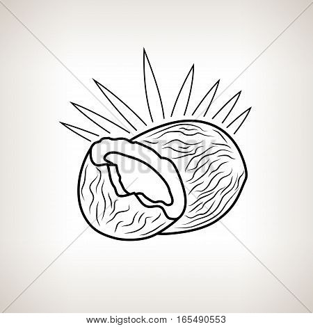Coconut ,Image Coco in the Contours on a Light Background ,Black and White Illustration