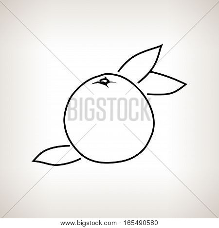 Grapefruit, Image Pomelo in the Contours on a Light Background ,Black and White Illustration