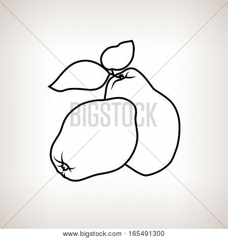 Quince, Image Apple Quince in the Contours on a Light Background ,Black and White Illustration