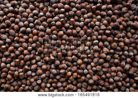 laid out on a table nuts hazelnuts closeup. texture nuts.