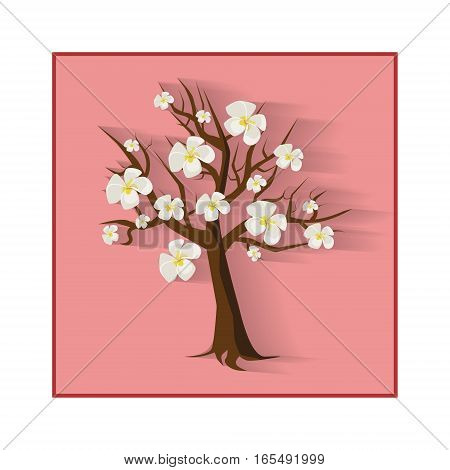 flowering cherry tree with his own shadow on the pinf background