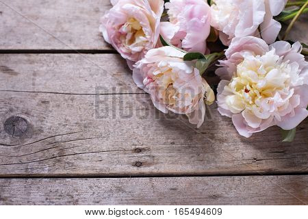 Bunch of pink peonies flowers on aged wooden background. Place for text. Selective focus. Still life.