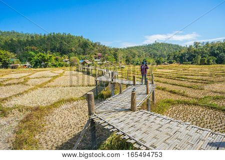 Long Bamboo Bridge in rice flied at Pai, Thailand