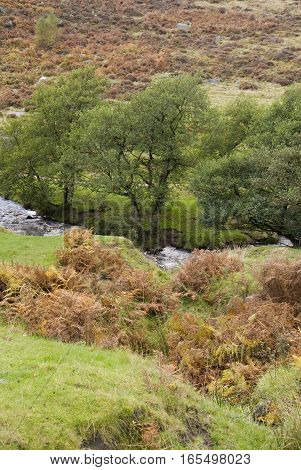 Burbage Brook flows across moorland on the Longshaw Estate, Peak District, Derbyshire, UK