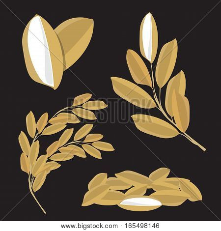 Paddy rice Seed vector nature raw food design