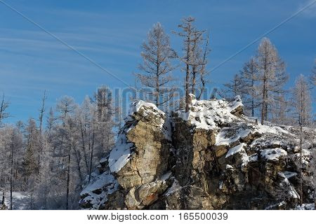 Cliff with trees covered with hoarfrost against the blue sky