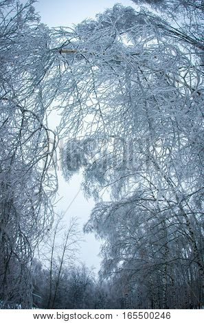 Iced Rain In Moscow Parks, Natural Disaster