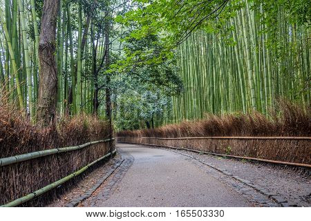 Path to bamboo forest Arashiyama Kyoto Japan