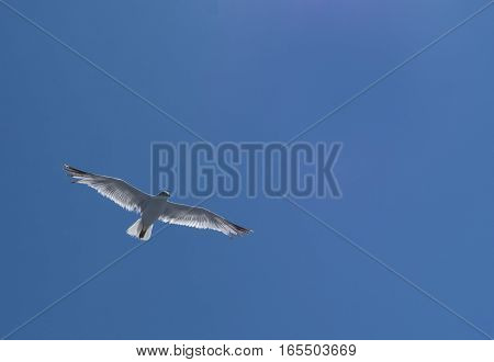 Flying seagull on a blue clear sky