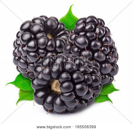 Group of three ripe blackberries with green leaves isolated on white background with clipping path