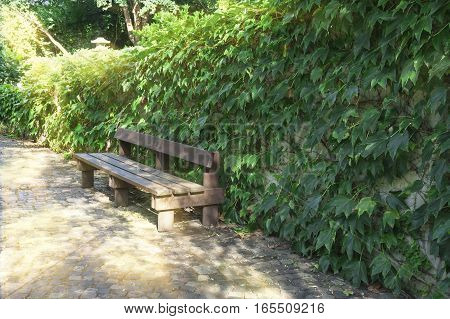 Beautiful park with path hedges and bench.