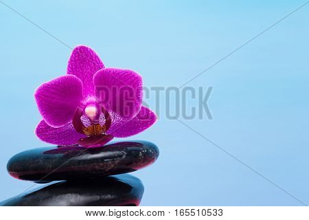 purple orchid lying on black stones on a blue background