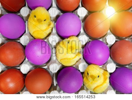 three toy chickens sit ibetween red and violet eggs