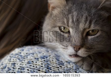 Woman holding her pet cat which is lying on her shoulder and looking through a window. Selective focus