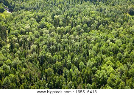 Aerial view of forest during a summer day.