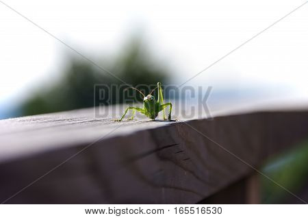 Grasshopper on a long wooden railing .