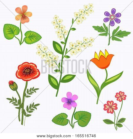 Flower set. Nasturtium, primula, viola, anemone, poppy, tulip, bird cherry. Spring flowers. Floral symbols with leaves. Color icons. May be used in cuisine. Vector isolated.