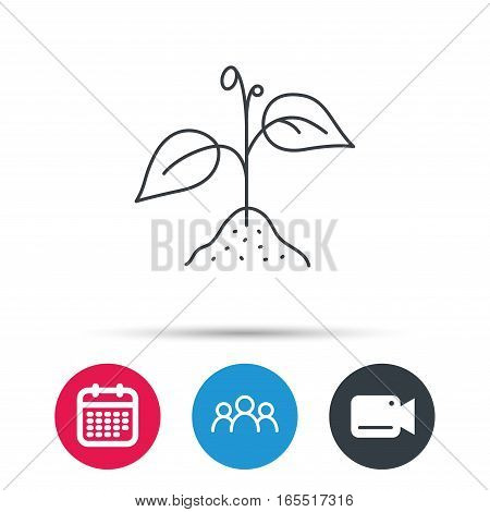 Plant with leaves icon. Agricultural or gardening sign symbol. Group of people, video cam and calendar icons. Vector
