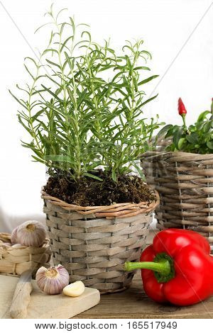 Fresh rosemary plant and other ingredients in the kitchen