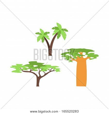 Old baobab tree isolated on white. Green forest madagascar vector plant. Large savanna tropical travel nature illustration. Africa natural wild trunk.