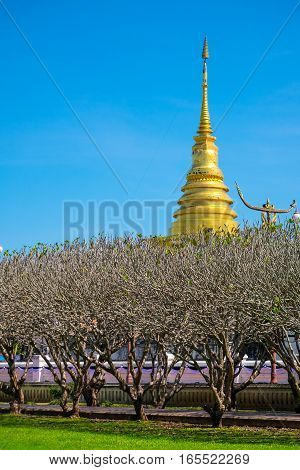 Bright sky with grass field in Nan Museum infront of golden pagoda in Wat Phra That Chang Kham NanThailand
