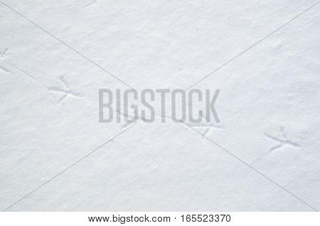 Bird tracks in snow in winter closeup