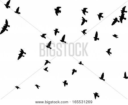 flock of pigeons vector silhouette on white background