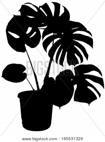 monstera the potted plant vector silhouette on white background