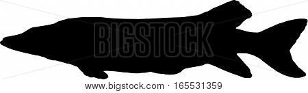 the big pike vector silhouette on white background