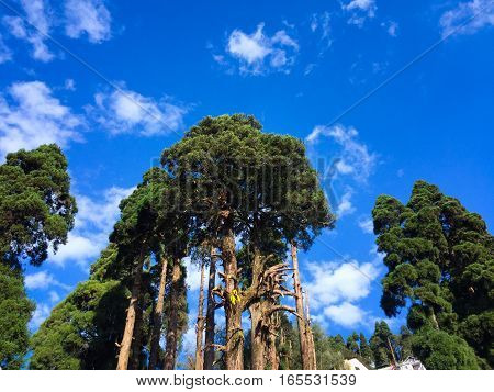 trees and sky at Darjeeling, West Bengal India