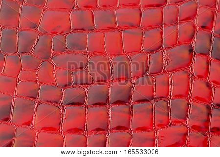 Texture of genuine patent leather close-up, embossed under the skin a reptile, background