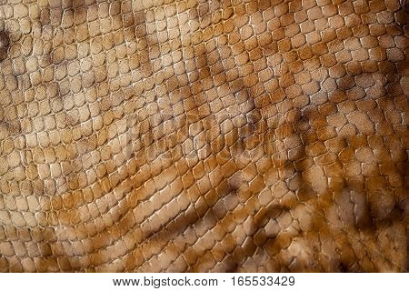 Texture of genuine leather close-up, embossed under the skin a brown reptile, background