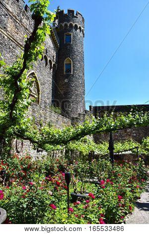 Rose garden at Castle Rheinstein in Germany.
