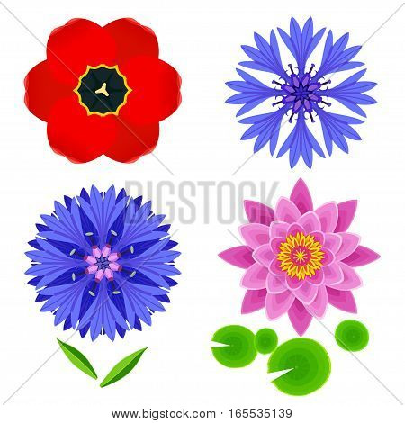 Set of different stylized lotus cornflower tulip and leaves. Collection of beautiful spring and summer flowers isolated on white background. Elements of floral design icons. Vector illustration