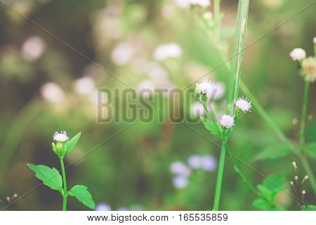 Small flowers on the purple light and green leaves