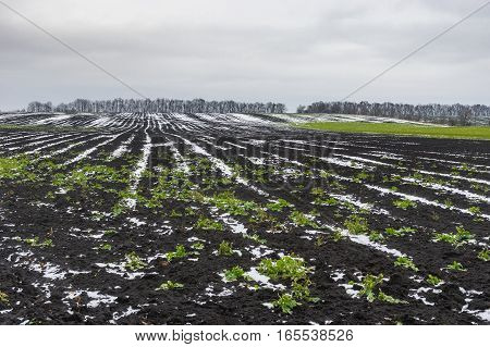 Landscape with agricultural fields covered by first snow in Ukraine at late autumnal season