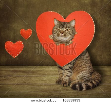 The handsome cat is sitting. His head went through a big red heart.