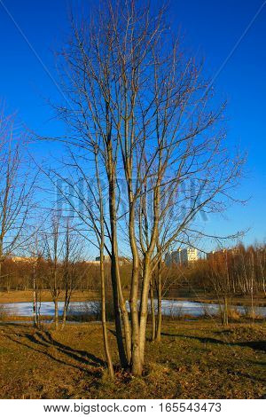 beautiful spring landscape: branch with on a background of blue sky, nature, tree