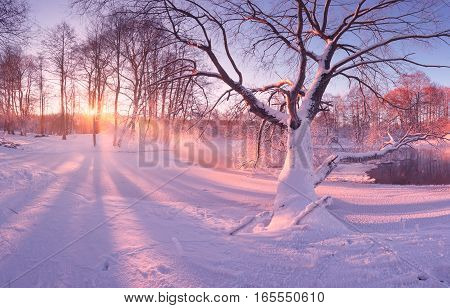 Winter sunrise in park. Frosty trees in morning sunlight. White snow on trees and on ground. Bright sunbeams on white snow. Shadows of trees on snow. Colorful winter background.