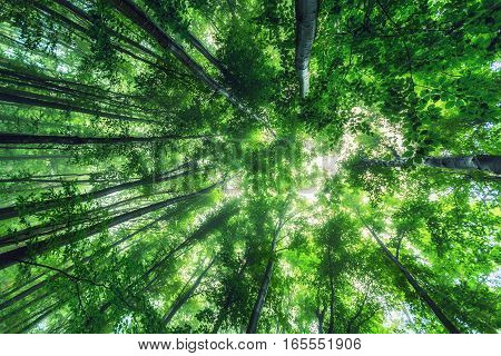 Beautiful nature at morning in the misty spring forest with sunshine