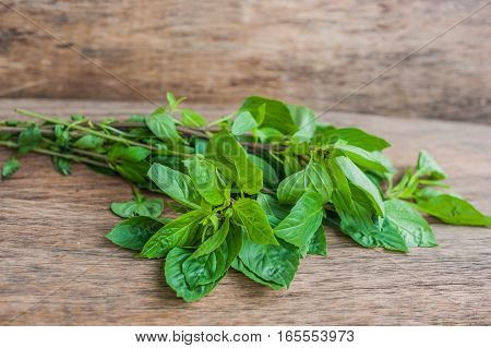 Bunch Of Fresh Organic Basil On Rustic Wooden Background