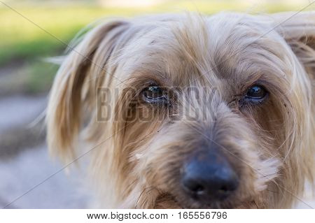 Sad dog look, desolating image cold colors. Maybe asking for help