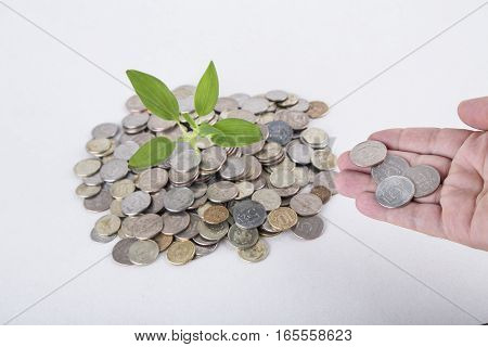 Concept. Plant Growing In Savings Coins - Investment And Interest