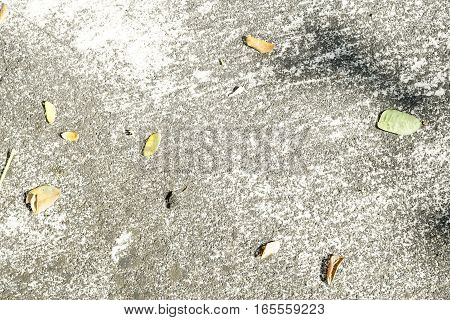 Grey cement texture background with leaf or leaves