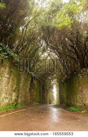 Road TF-12 in Anaga Rural Park - rain and clouds in ancient forest on Tenerife Canary Islands winter travel destination