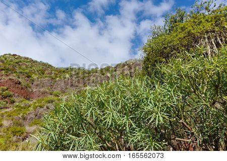 Road TF-12 in Anaga Rural Park - evergreen peaks with ancient forest on Tenerife Canary Islands winter travel destination